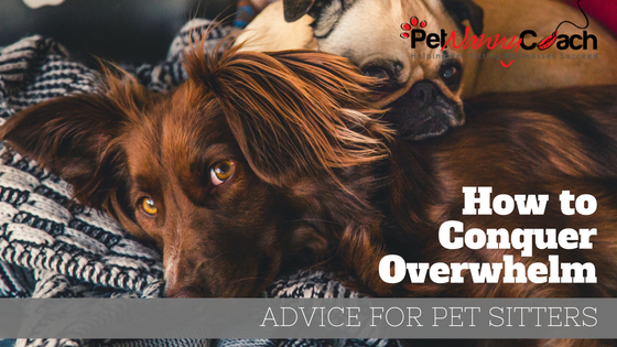 how to conquer overwhelm title image